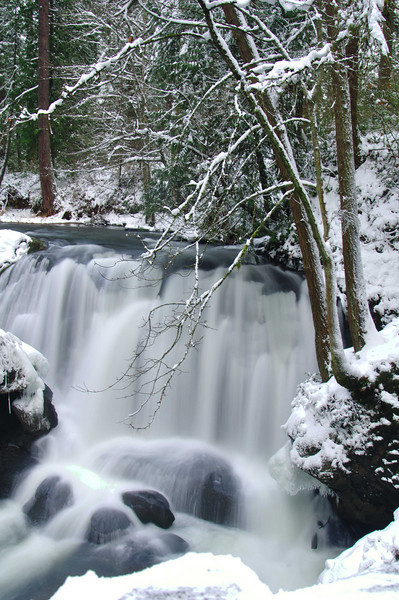 Winter Beauty<br /> Whatcom Falls Park, WA