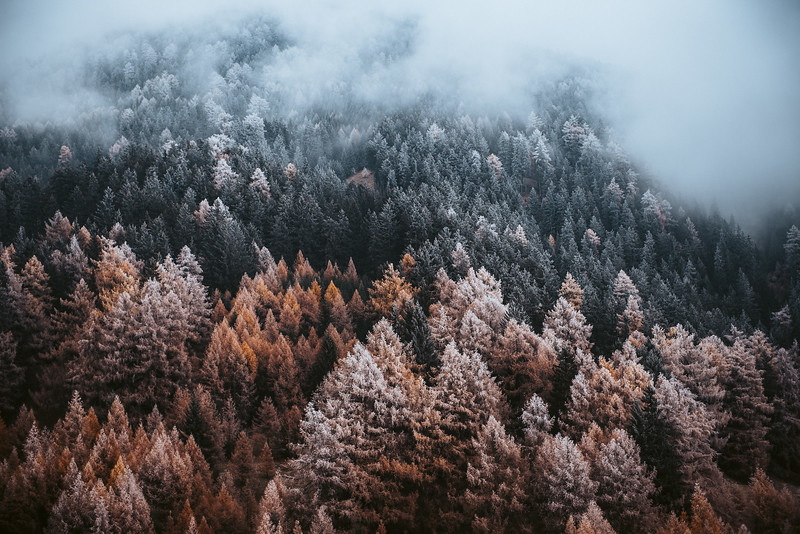 Change of Seasons, Süd Tirol, Italy, 2018