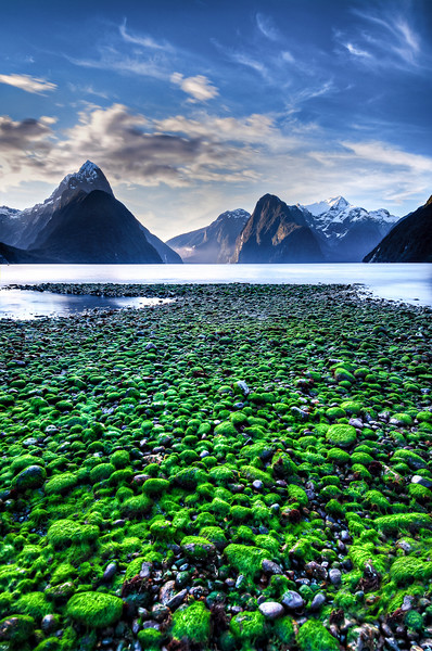 Green covered stones, Milford Sounds, New Zealand 2013