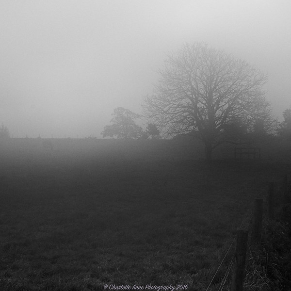 Misty Walk Wiltshire
