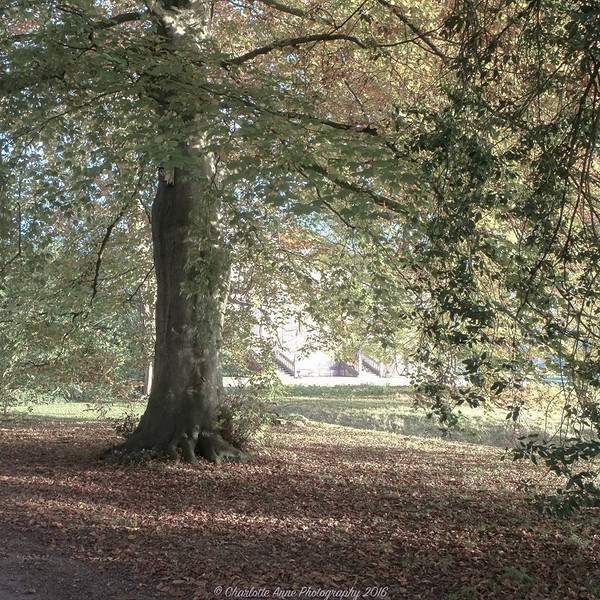 Lacock Abbey Autumn Sunshine