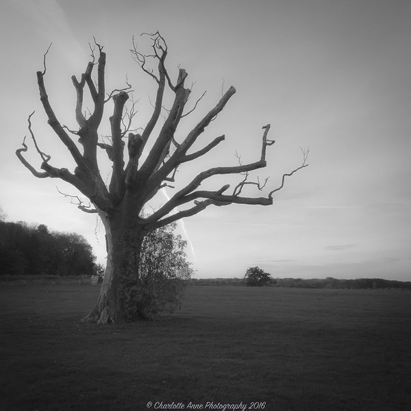 Dead Tree Forgotten