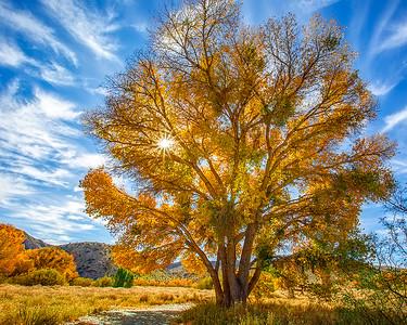 Fall Colors at Morango Preserve