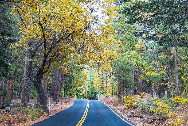 San Bernardino National Forest Fall Colors