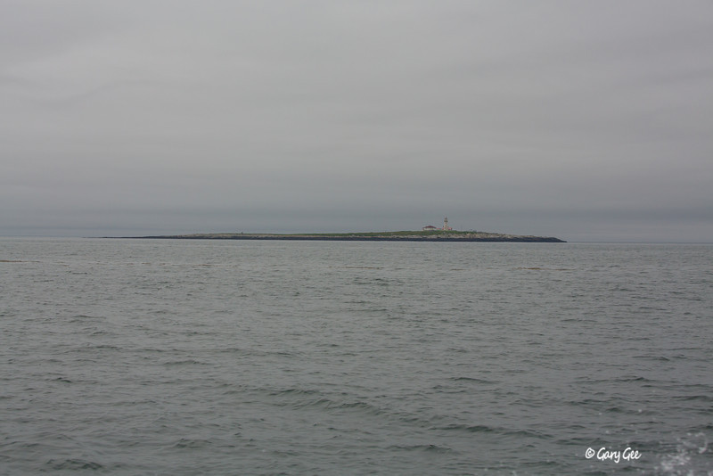 Machias Seal Island is located 12 miles off the coast of Maine and Canada with both countries claiming sovereignty over the island. The Canadian Coast Guard occupies the lighthouse currently. Established in 1832