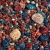 Shoreline Mosaic - #1
