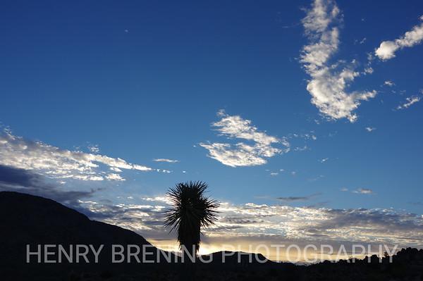 Sunrise @ Joshua Tree National Park, Ca USA