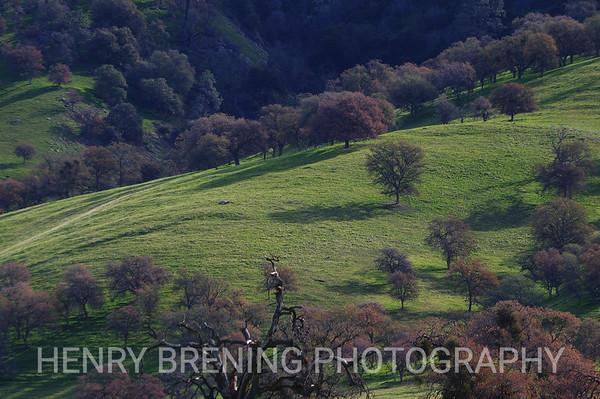 Rolling Tree Hill - Tehachapi, Ca USA