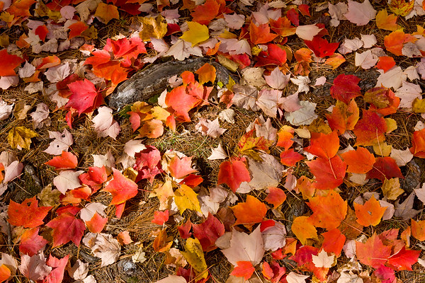 Autumn Leaves - Sebago Lake State Park, ME