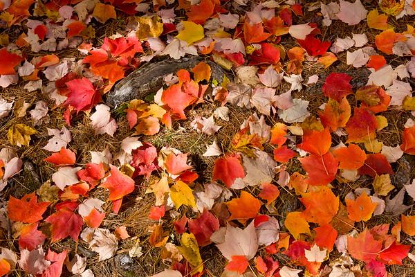Autumn Leaves - Sebago Lake State Park, ME