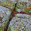 Lichen covered Rock - Acadia National Park, ME