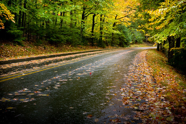 Autumn Leaves on Road - Acadia National Park, ME