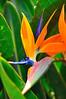 Hawaiian flower; Maui