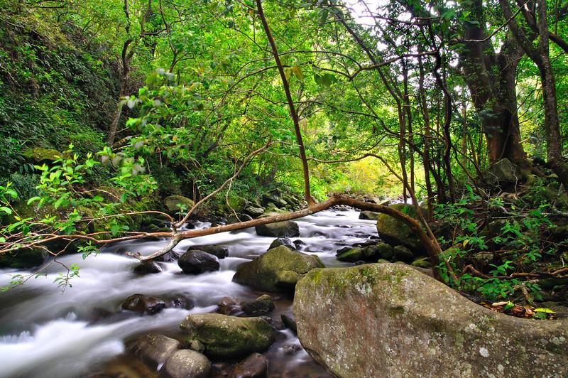 Iao Valley Stream; Maui