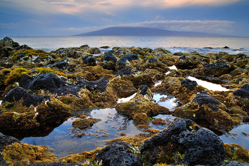 Maui's Rocky Shore