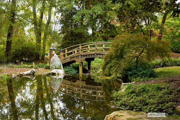 Quick Edit from the Japanese Garden at Maymont in Richmond, VA by Annette Holloway Photography