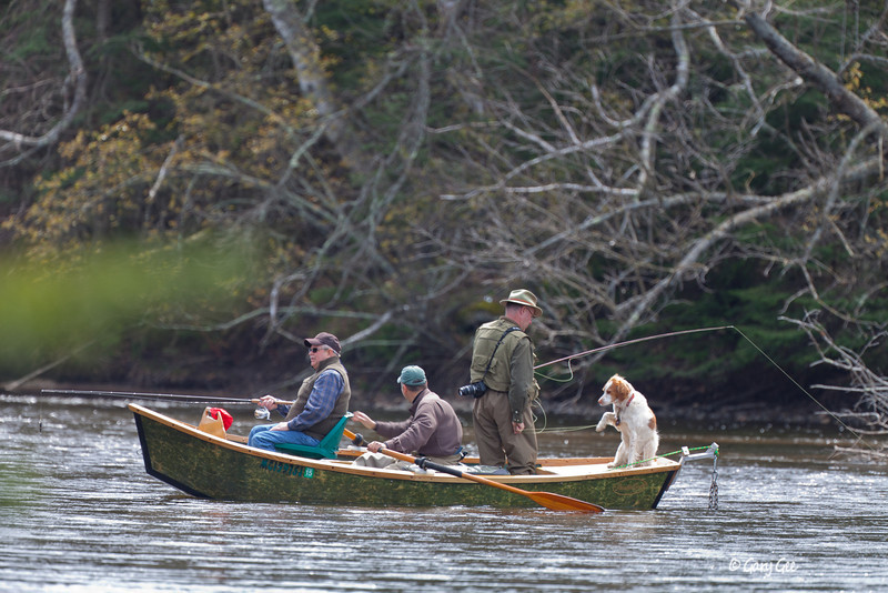 Au Sable River Fisherman - Check out the dog getting into the action!