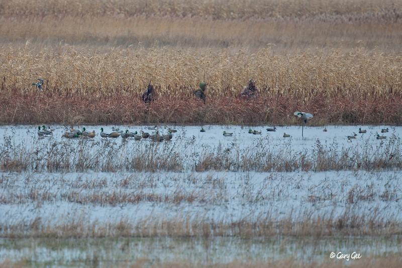 Duck Hunting Trio Saginaw Bay, MI