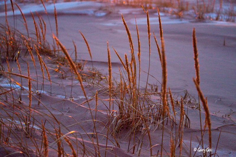 Electric Grass - Sleeping Bear Dunes - Winter