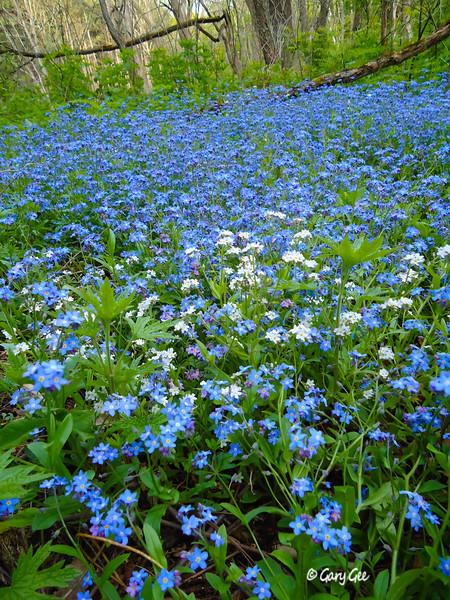 Spring Meadow in Sleeping Bear National Park