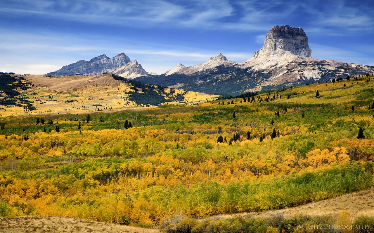 Brilliant colors in the aspen forest near Chief Mountain, Glacier National Park