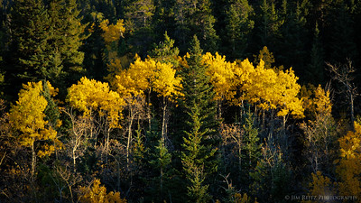 Autumn color, Glacier National Park