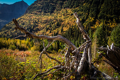 Autumn color, Glacier National Park