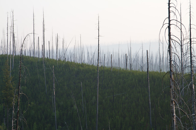 West Side Park Ridge from an earlier fire years later  - Lodgepole Pines