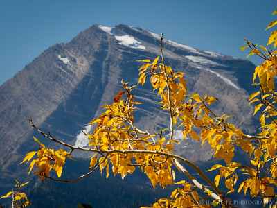 Fall color - Glacier National Park