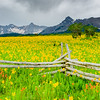 Western Fence Rails in a Field of Daisies