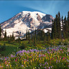 "<font color=""#FFFFFF"" size=""4"" face=""Verdana, Arial, Helvetica, sans-serif"">Rainier Paradise</font><br> Mt Rainier, Washington"