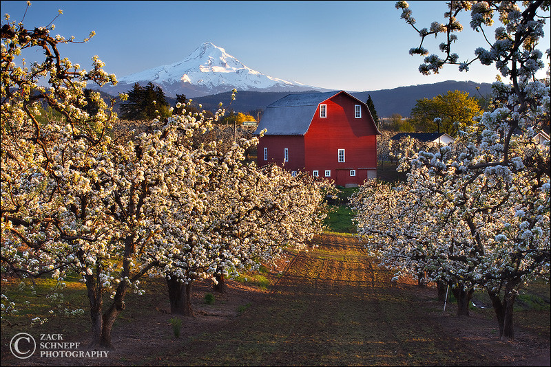 "<font color=""#FFFFFF"" size=""4"" face=""Verdana, Arial, Helvetica, sans-serif"">Popcorn Tree Orchard</font><br> Hood River, Oregon"