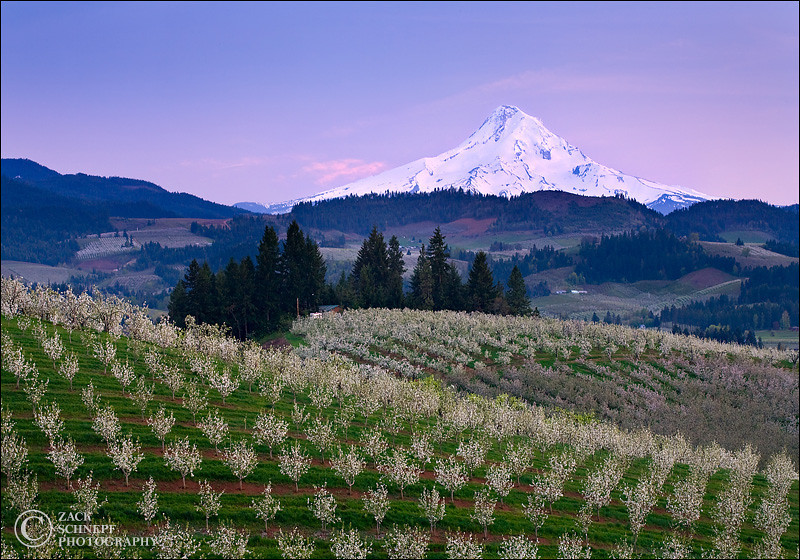 "<font color=""#FFFFFF"" size=""4"" face=""Verdana, Arial, Helvetica, sans-serif"">Hood River Orchards</font><br> Hood River, Oregon"