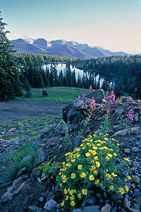 Wildflowers in Irwin looking at the Anthracite range