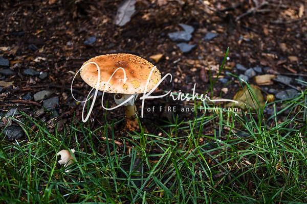 Mushrooms - August 2018