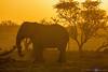 Backlit elephant at sunset - Etosha National Park, Namibia.