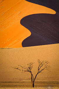 Sinuous curves of tall sand dunes - Sossusvlei, Namibia.