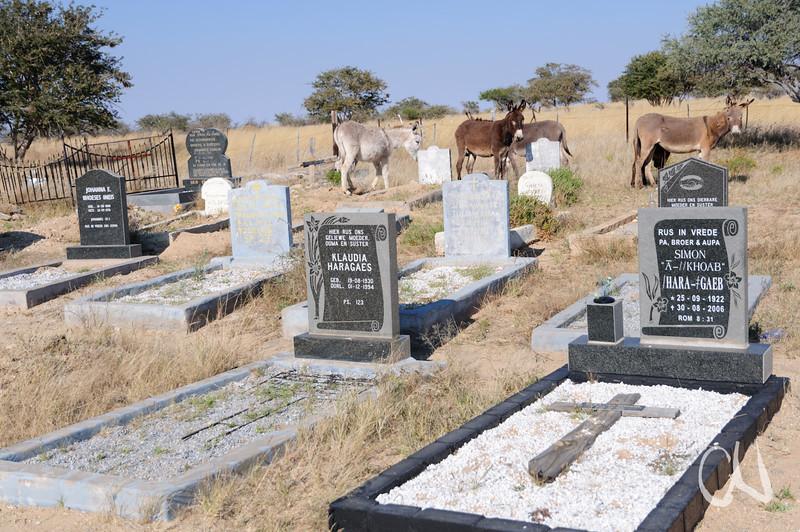 donkeys grazing at a village cemetery, Esel grasen auf einem Friedhof, nahe Spitzkuppe, Spitzskoppe, Namibia