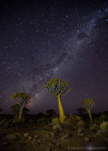 The Milky Way rising over the Quiver Tree forest in Namibia.