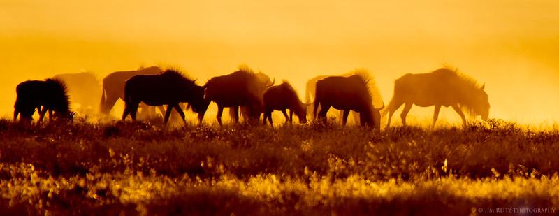 Wildebeest silhouettes at sunrise. Etosha National Park, Namibia.