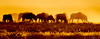 Wildebeest silhouettes at sunrise. Etosha National Park, Namibia.