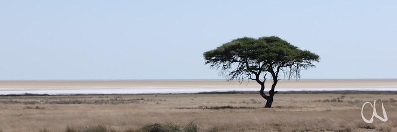 vereinzelte Akazie, Salzpfanne, Etosha National Park, Namibia
