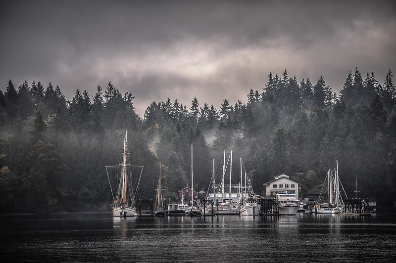 morning fog, Bainbridge WA