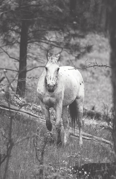 white horse in dark woods