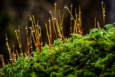 Goldstream droplets, Victoria BC