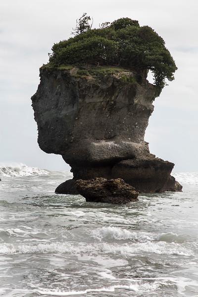 Rock head, Motukiekie Beach   - West Coast NZ