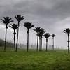 Nikau Grove - West Coast