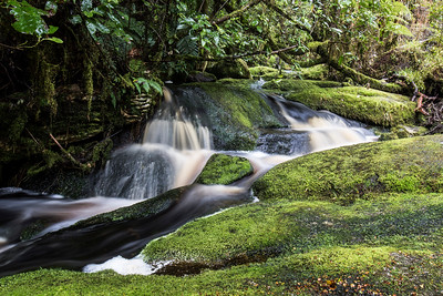 Mountain Stream,  Kahurangi National Park Westland
