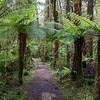 Native rain forest in the Oparara Basin, Kahurangi National Park Westland