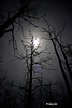 """Winter Moonlight"" through the remains of a forest fire's eyes"